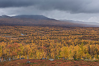Autumn mountain landscape along Kungsleden trail in Vindelfjällen nature reserve, Lapland, Sweden