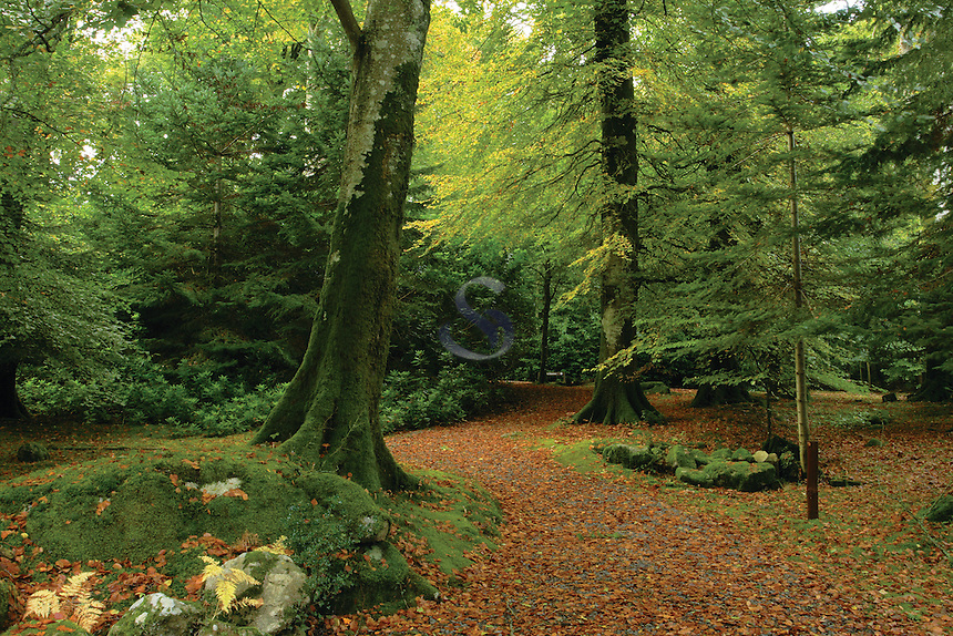 Shambellie Wood in autumn, New Abbey, Dumfries and Galloway