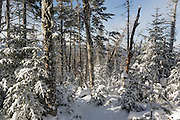Snow covered forest along the North Carter Trail in the White Mountains, New Hampshire during the winter months.