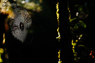 Image Ref: YR174<br /> Location: Wirrawilla Rainforest, Toolangi<br /> Date: 27.01.18