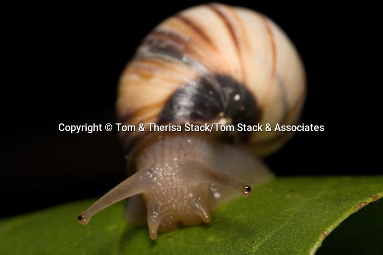 Eyes of a Snail