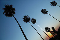 Palm trees line streets in Coronado, California.