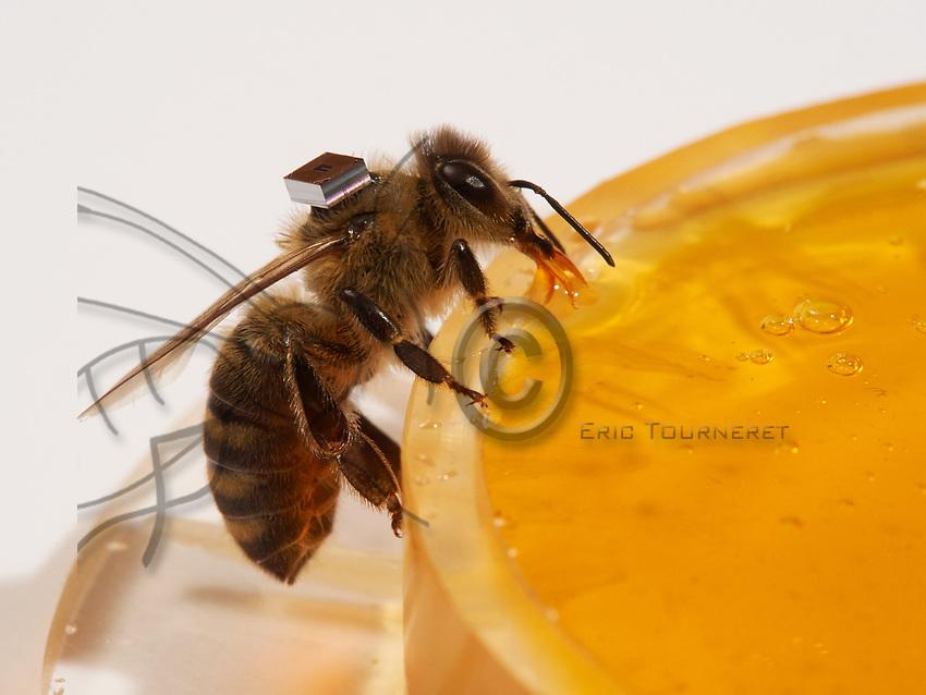 Microchips are used by researchers to mark the bees and identify them with a scanner at the entrance to the hive or near the nurse bees. In that way, it is possible to monitor the bees' activities on an individual level. The times they go out, etc&hellip;<br /> Centre de recherche HOBOS, W&uuml;rzburg, Germany.<br /> Les puces &eacute;lectroniques sont utilis&eacute;es par les chercheurs pour marquer les abeilles et les identifier par scanner &agrave; l&rsquo;entr&eacute;e de la ruche ou alors pr&eacute;s des nourrisseurs. Il est ainsi possible de suivre les activit&eacute;s des abeilles au niveau individuel. Leurs heures de sorti&hellip;