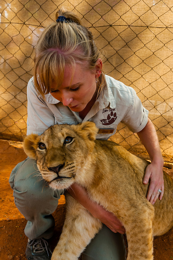 Trainer with four month old lion cub, Lion Park, near Johannesburg, South Africa.