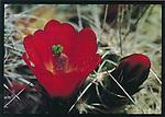 California Deserts.  5x7 Postcards. FrankBalthis