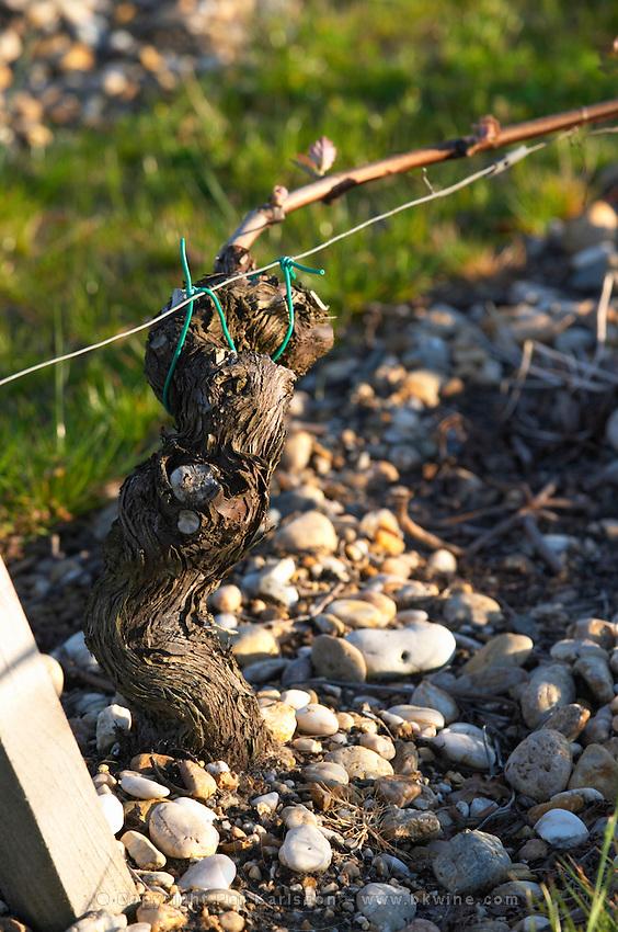 sandy gravelly soil old vine chateau belgrave haut medoc bordeaux france