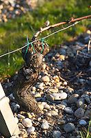 sandy gravelly soil old vine chateau belgrave haut medoc bordeaux france