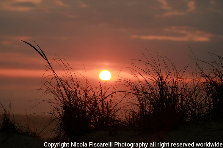 Early morning sunrise at the New Jersey beach   silhouetted by seagrass.