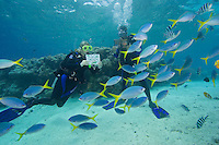 Divers (MR) with fish identification book/card.  Palau, Micronesia.