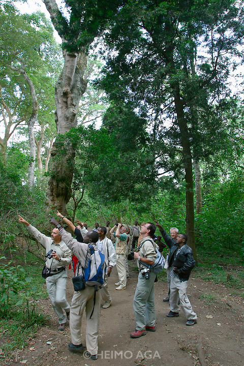 LAKE LANGANO, RIFT VALLEY, SHEWA/ETHIOPIA..Primary forest nature trail near Bishangari Lodge..Tourists spotting a Pirol..(Photo by Heimo Aga)