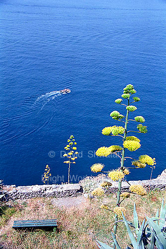 A boat cruises the Mediterranean coast as seen from a hill along the Cinque Terre in Italy.