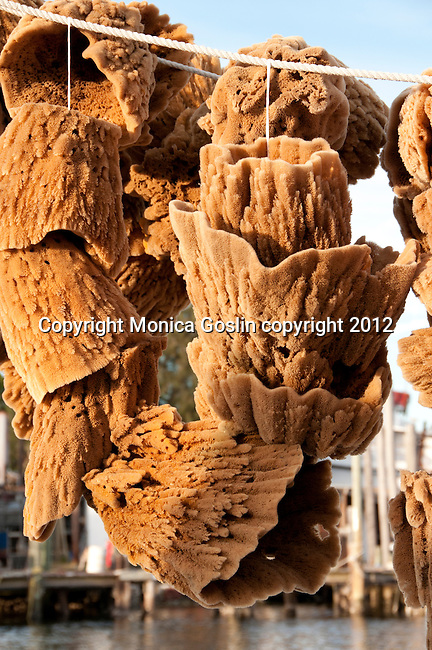 Vase sponges drying on ropes in Tarpon Springs, Florida a town which has the highest percentage of Greek Americans in any US city and which is known for sea sponges