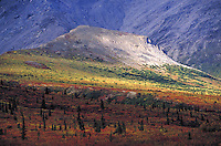 Fall tundra. Alaska USA Denali National Park.