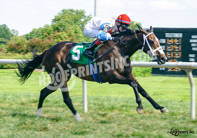 Langfirst winning at Delaware Park on 8/24/16