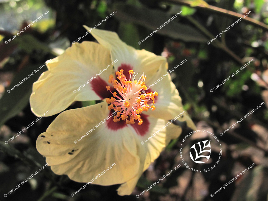 Elegant beautiful Wild sour flower with petals dropping down
