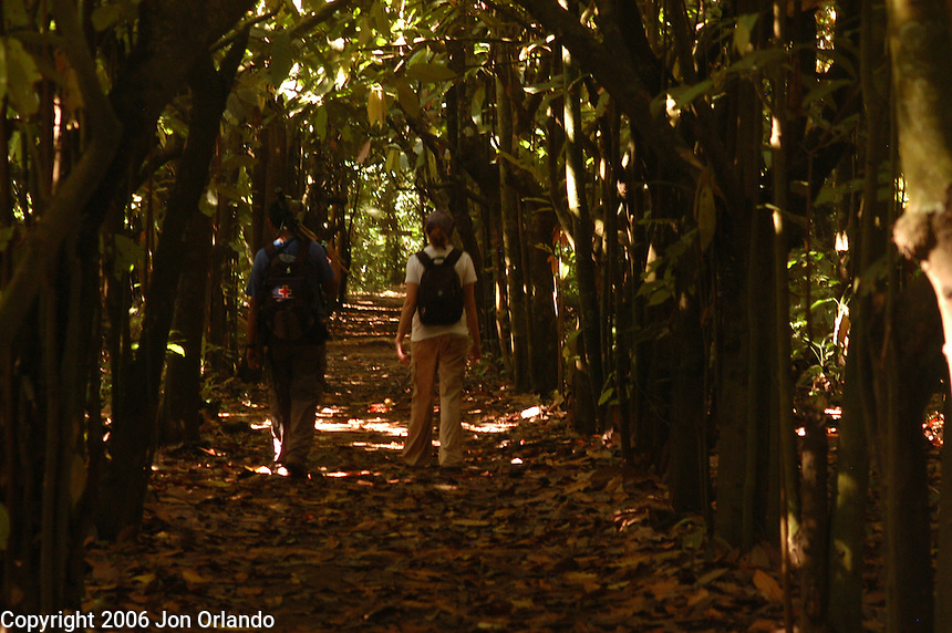 A walk down a path through a cocoa platation in Costa Rica.
