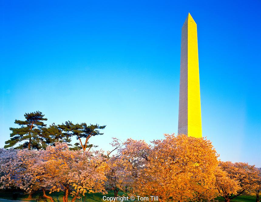 Cherry blossoms Washington Monument and Tidal Basin  Washington D.C.  April