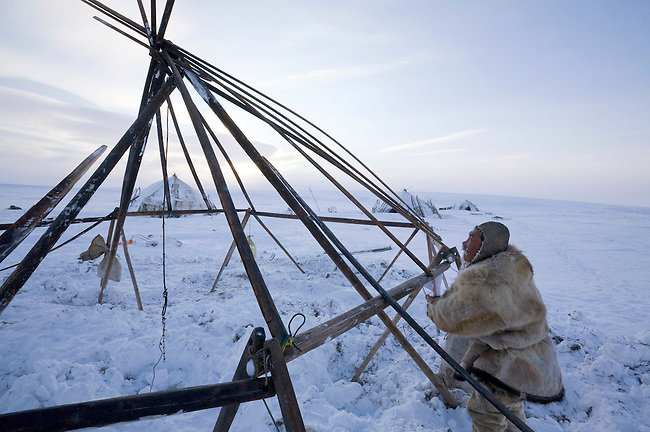 Grisha Rahtyn, a Chukchi reindeer herder, erecting the frame of a Yaranga (traditional tent). Chukotskiy Peninsula, Chukotka, Siberia, Russia