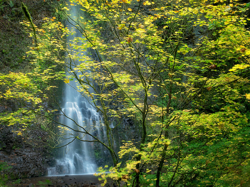 Double Falls and fall color. Silver Falls State Park, Oregon