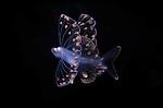 Fish larva