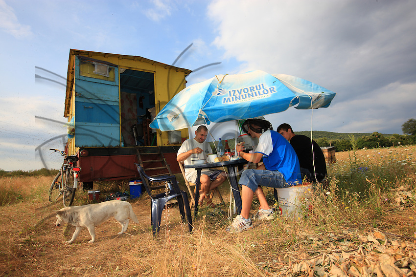 Onéa Dinu's team set up a table for their meals near the trailer. The bees of the Carpatian species are gentle and a simple parasol at the right height guarantees the tranquility of the beekeepers as they share their meals.