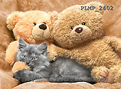 Marek, ANIMALS, REALISTISCHE TIERE, ANIMALES REALISTICOS, cats, photos+++++,PLMP2402,#a#