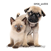 Xavier, ANIMALS, REALISTISCHE TIERE, ANIMALES REALISTICOS, FONDLESS, photos+++++,SPCHWS600,#A#