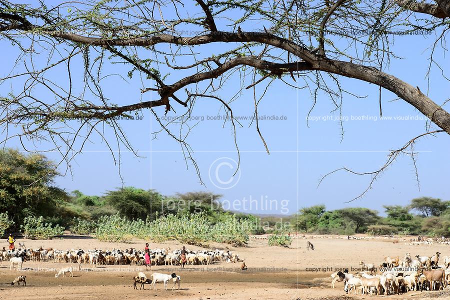 KENYA, Marsabit, drought, cattle herder with goats searching vor water and fodder, dried river bed / KENIA, Marsabit, Tierhaltung, Hirtenjunge mit Ziegenherde auf Suche nach Wasser und Futter, trockenes Flussbett