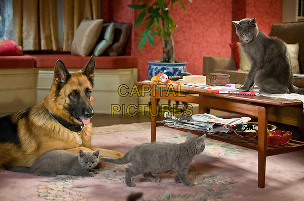 DIGGS, voiced by JAMES MARSDEN and (top right) CATHERINE, voiced by CHRISTINA APPLEGATE.in Cats & Dogs: The Revenge of Kitty Galore.*Filmstill - Editorial Use Only*.CAP/FB.Supplied by Capital Pictures.
