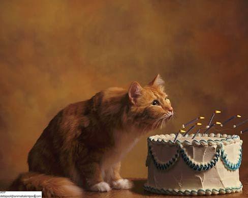 Joe Lampi Photography Birthday card – Photographer Birthday Card