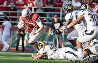 Trevor Guyton creates the sack on Jeff Tuel. The University of California football defeated Washington State University 20-13 at Martin Stadium in Pullman, Washington on November 6th, 2010.