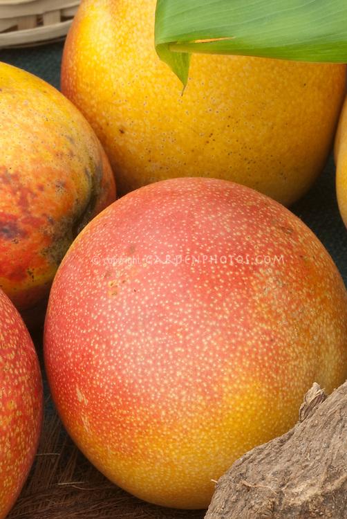 Mangoes ripe