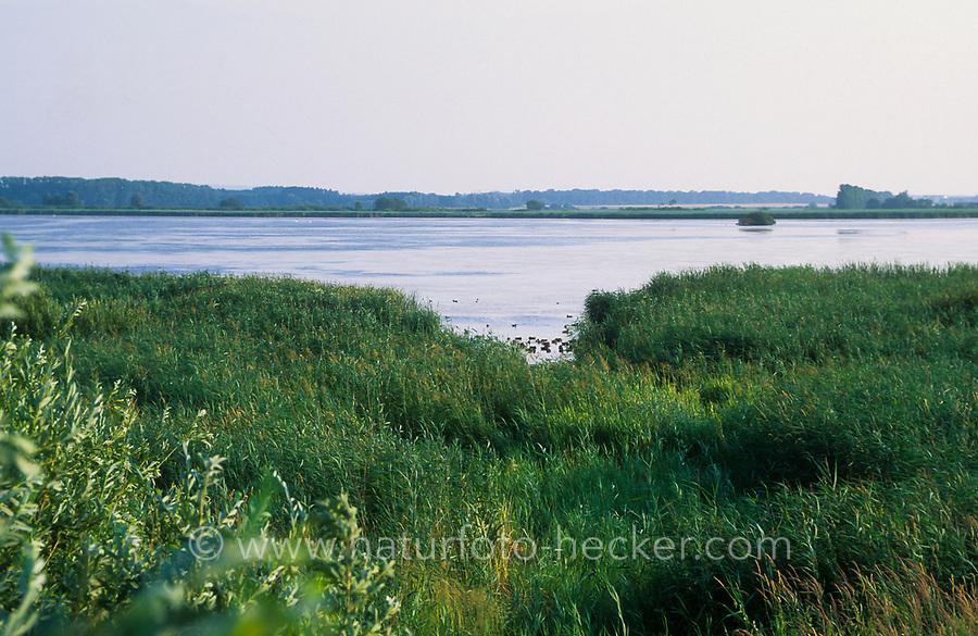 Putzarer See, Verlandungsee mit breiter Schilfzone, Uferzone, Schilfgürtel, Naturschutzgebiet, Mecklenburg-Vorpommern, Deutschland