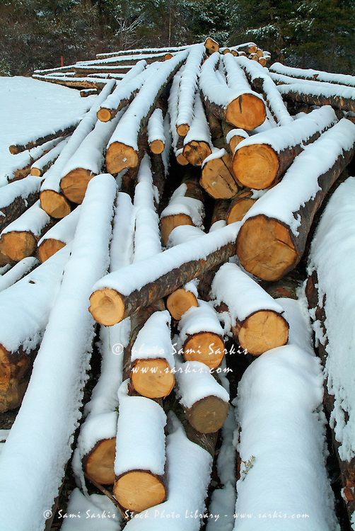 Pile of chopped logs covered in snow, Selonnet, French Alps, France.