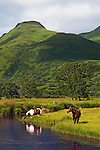 Horses grazing on the less inhabited end of Kodiak Island..