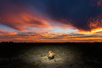'The King of Dusk'<br />