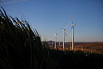 CAETITE, BRAZIL - OCTOBER 25, 2013:<br /> Wind-turbines all around the home of the Silva family. The family agreed to be paid $250 a month to permit Renova Energia with wind turbines on their 46-acre land. A string of wind-turbine parks, in the municipal of Caetite, are being erected in the windiest stretches of Bahia state, Brazil, on Friday, Oct 25, 2013. <br /> (Photo by Lianne Milton/For The Washington Post