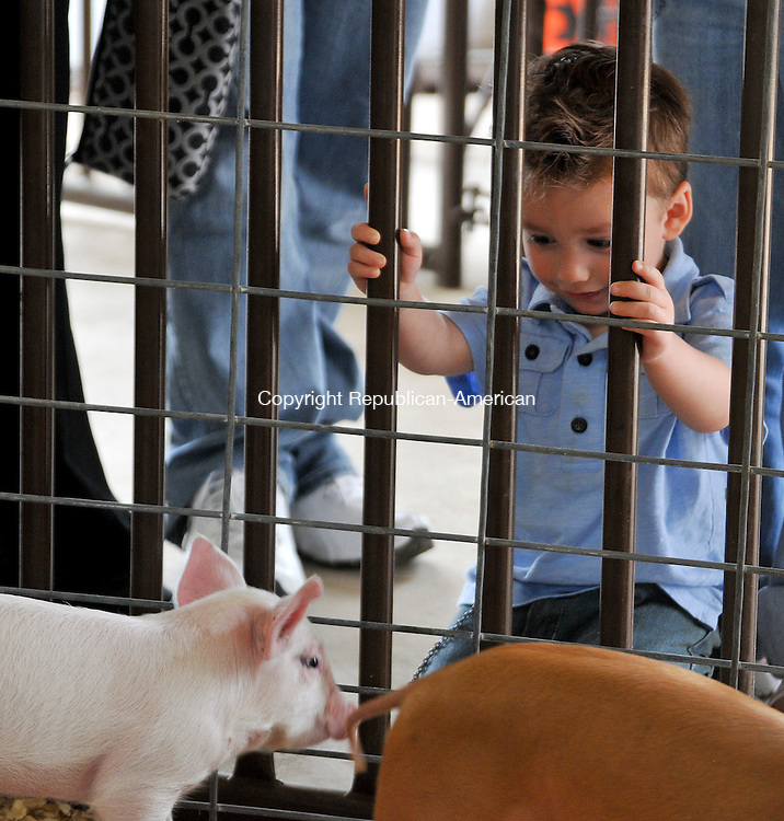 WOLCOTT, CT 18 AUGUST 2013--081813JS09-Bentley Rodrigues, 2, of Wallingford looks over the piglets during the final day of the Wolcott Lions Club's Country Fair on Sunday. <br /> Jim Shannon Republican American