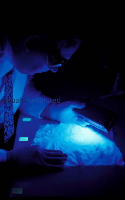 Police detective or forensic scientist examining evidence with an ultra-violet (UV) light.