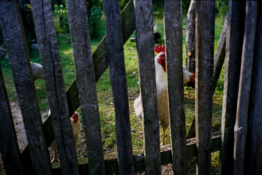 Novy Tomysl. Only few things have changed since Elsa and her family left their houses behind - the new owners still raise chickens in the garden just like Elsa's parents did.