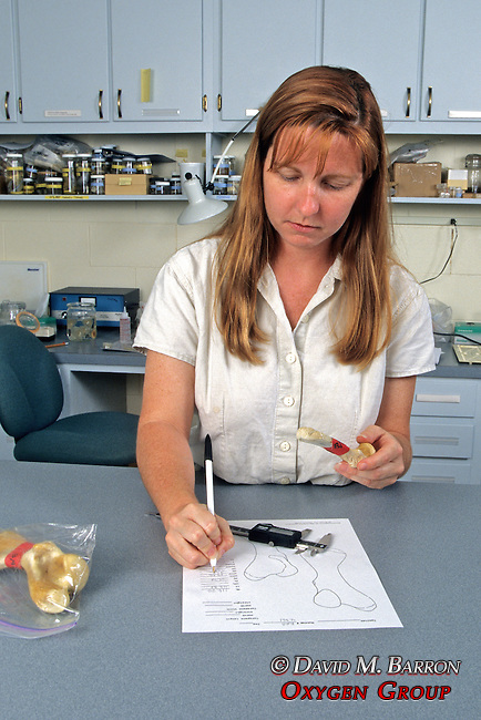 Melissa Snover Measuring Turtle Bone
