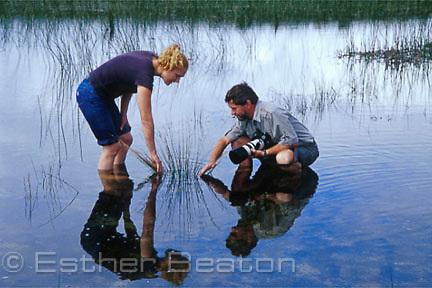 Man, photographer, and woman investigating reeds in a swamp. Jibbon Lagoon, Royal National Park, NSW