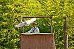 Snowy Owl at the Locarno Bird Show, Falconry Show (Falconeria Locarno)