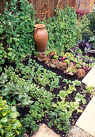 Peas growing upright on wicker supports against woven fence in mixed small space vegetable garden