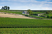 Vineyards at St Emilion in the Bordeaux wine region of France