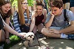 Left to right, Abigail Jones, Sarah Pelletier, Rachel Bell and Chris Brown pet Bambi, a therapy dog from Go Team, a non-profit organization that trains therapy, crisis and service dogs, on the Lincoln Park Quad for Dogs on the Quad, an event hosted by the DePaul Activities Board and Health Promotion and Wellness team, Wednesday, May 31, 2017. Therapy dogs were on hand to help students deal with the stress and anxiety that often comes up during finals. The event was part of Brain Fuel Week, a week of events designed to help students de-stress as they head into finals. (DePaul University/Arielle Toub)