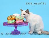 Xavier, ANIMALS, cats, photos, SPCHCATS711,#A# Katzen, gatos