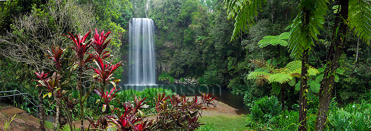 Millaa Millaa Falls on the Atherton Tablelands.  Millaa Millaa, Queensland, AUSTRALIA