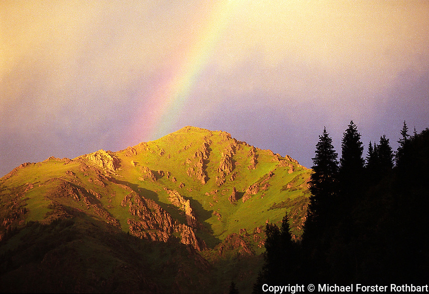 Silhouettes of Tian Shan pine trees frame a rainbow at sunset in the remote Kara river valley, in the Zhungarsky Alatau mountains between Tekeli, Kazakhstan and the Chinese border.<br /> <br /> &copy; Michael Forster Rothbart<br /> www.mfrphoto.com <br /> 607-267-4893 o 607-432-5984<br /> 5 Draper St, Oneonta, NY 13820<br /> 86 Three Mile Pond Rd, Vassalboro, ME 04989<br /> info@mfrphoto.com<br /> Photo by: Michael Forster Rothbart<br /> Date: 1999   File#:  color negative 99056-25