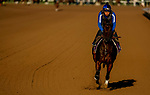 October 28, 2019 : Breeders' Cup Juvenile Fillies entrant Donna Veloce, trained by Simon Callaghan, exercises in preparation for the Breeders' Cup World Championships at Santa Anita Park in Arcadia, California on October 28, 2019. John Voorhees/Eclipse Sportswire/Breeders' Cup/CSM